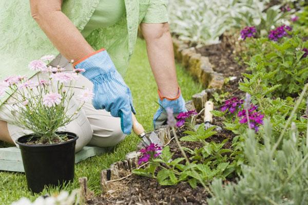 Dịch vụ chăm sóc cây cảnh đem lại nhiều lợi ích cho người sử dụng