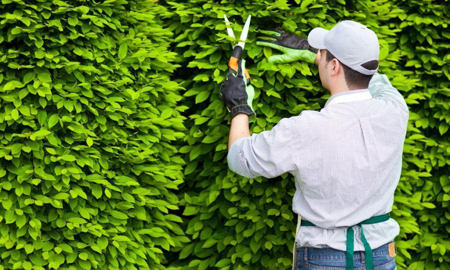 Vệ Sinh Cây Xanh mang đến nhiều dịch vụ cây xanh tốt nhất