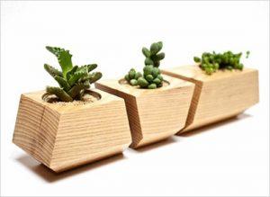 Cách chăm sóc cây xanh và thảm cỏ