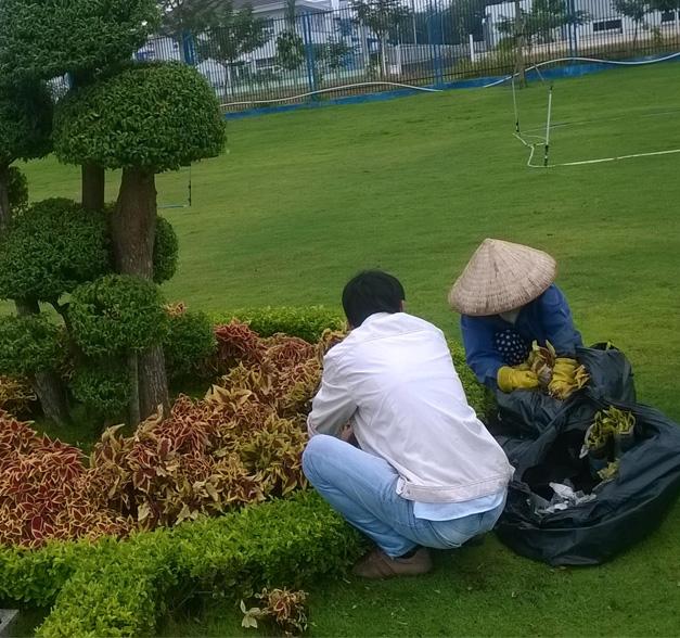Dịch vụ chăm sóc cây xanh ở Tây Ninh