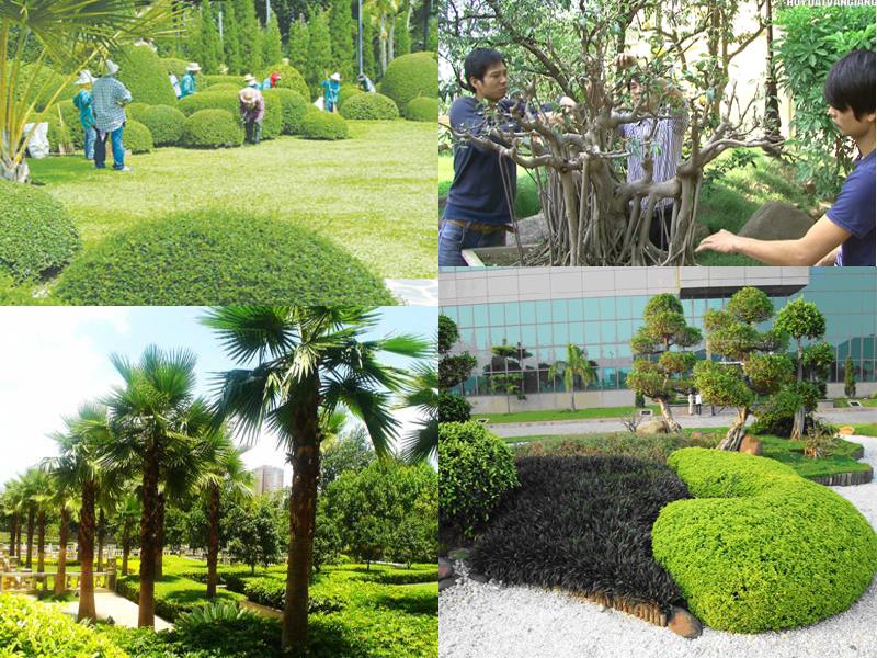 Công ty dịch vụ vệ sinh cây xanh