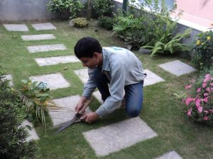 Dịch vụ chăm sóc sân vườn uy tín giá rẻ nhất