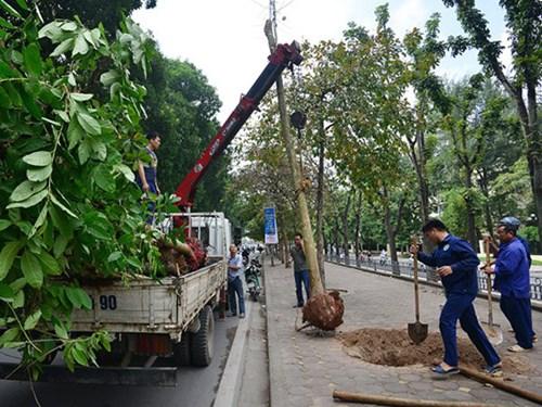 Công ty trồng cây ở Bình Dương
