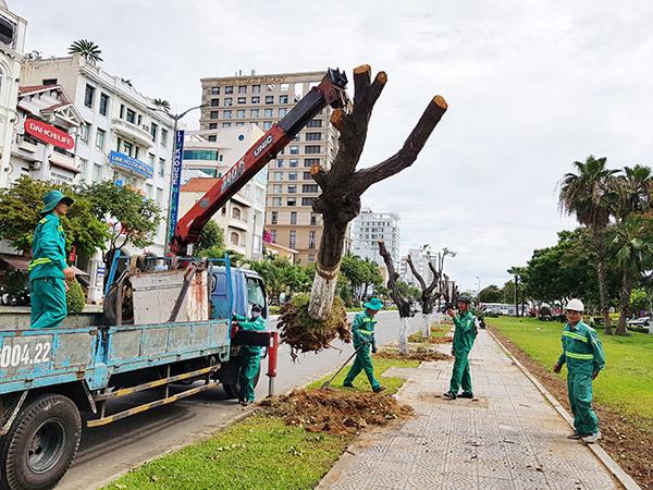 Công ty di dời cây xanh ở Bình Dương