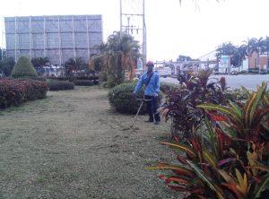 Dịch vụ cây xanh ở Tây Ninh | Trồng cỏ | Trồng cây | Chắm sóc | Di dời