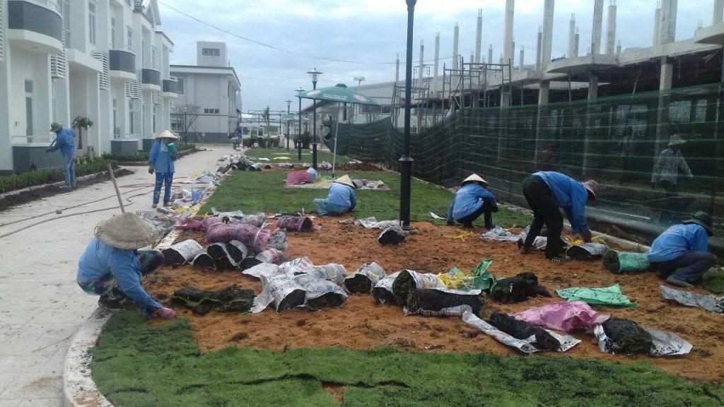Dịch vụ trồng cỏ ở KCN Bàu Bàng