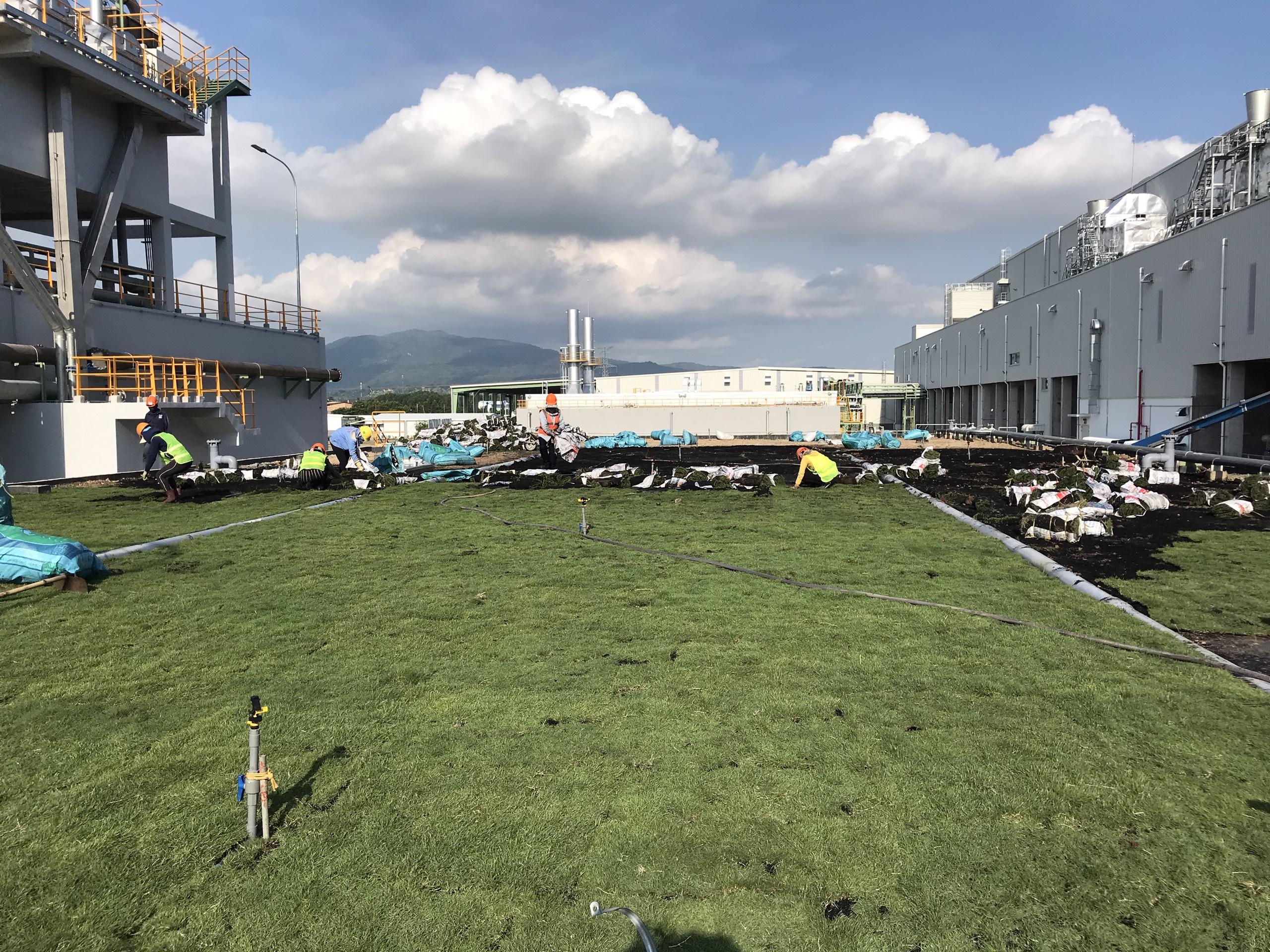 Dịch vụ trồng cỏ ở KCN Mỹ Phước