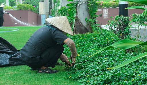 Dịch vụ chăm sóc cây xanh tại Dầu Tiếng